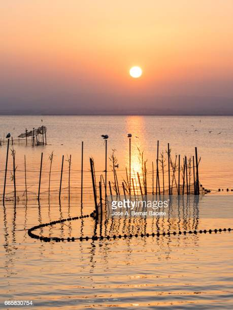 Sunset in Albufera lake, with sticks and handcrafted traps for the fishing, with a boat of wood with passengers in the lake , near Valencia, Spain.