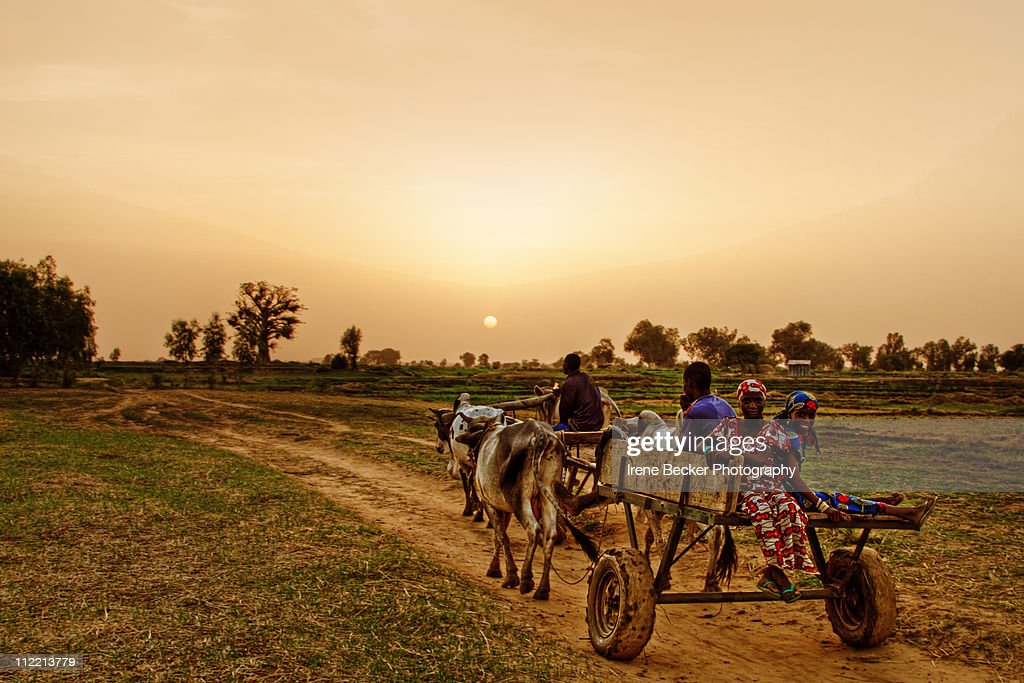 Sunset In Argungu : Stock Photo