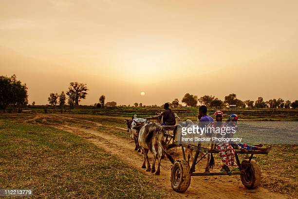 sunset in argungu - nigeria stock pictures, royalty-free photos & images
