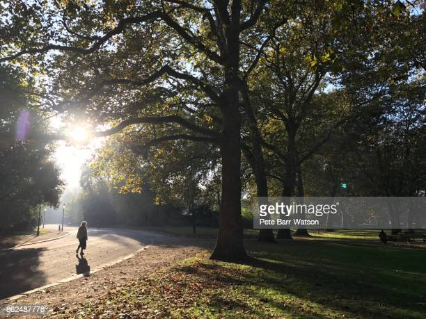 a sunset in battersea park - battersea stock pictures, royalty-free photos & images