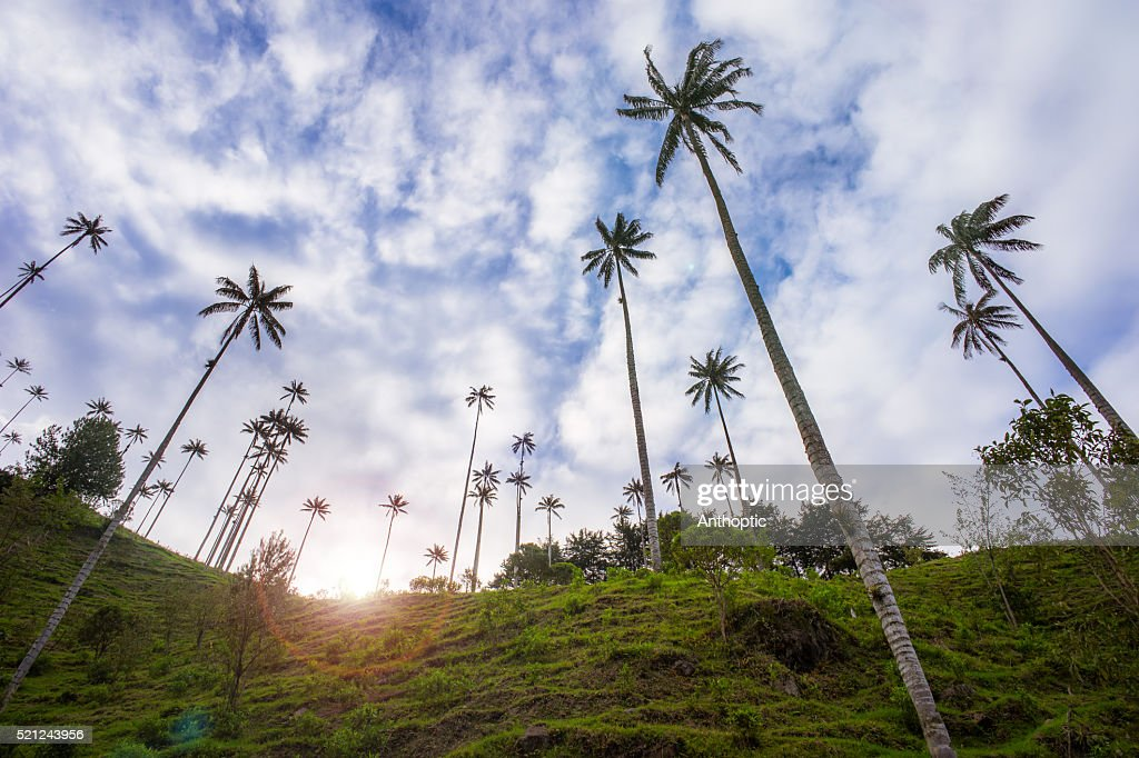 Sunset in Cocora Valley : Stock Photo