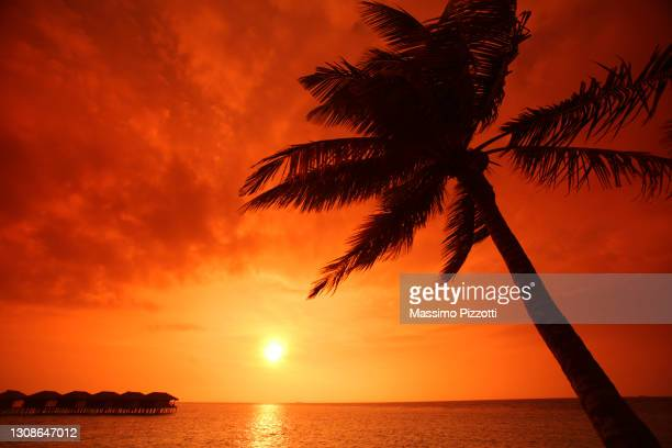 sunset in filitheyo island, maldives - massimo pizzotti foto e immagini stock