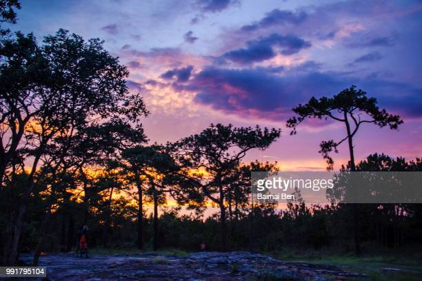 sunset in fores - forens stock pictures, royalty-free photos & images