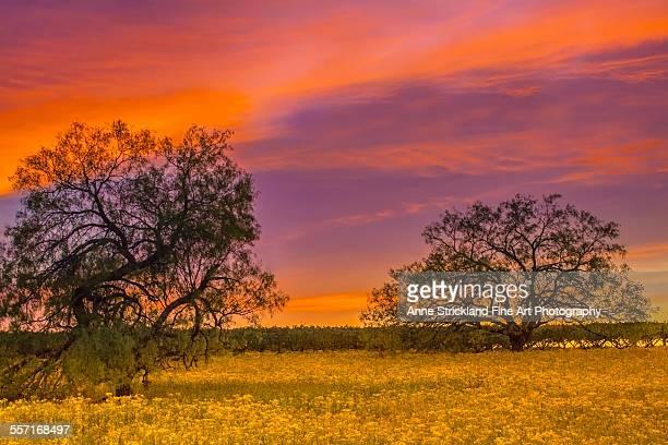 Sunset in Fredericksburg, Texas