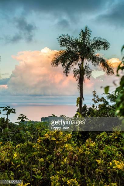 sunset in jamaica - paisajes de jamaica fotografías e imágenes de stock