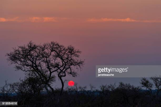 sunset in kruger national park, mpumalanga, south africa - mpumalanga province stock pictures, royalty-free photos & images