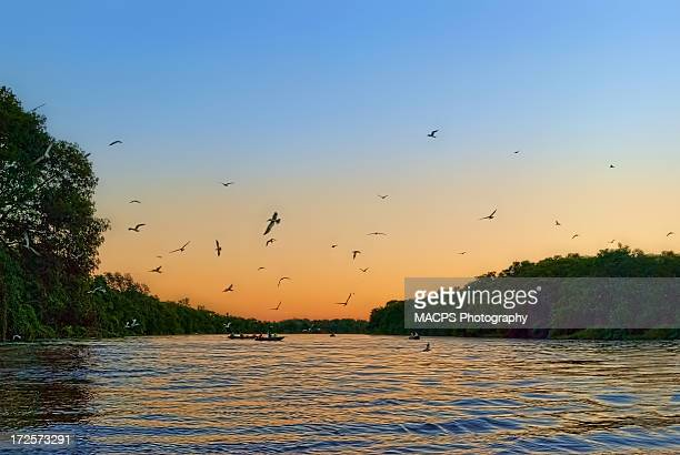 sunset in pantanal - cuiaba river stock photos and pictures
