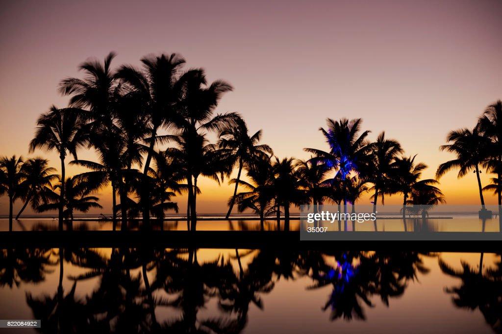 sunset in paradise : Stock Photo