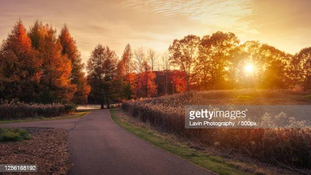 sunset in park in autumn, minneapolis, minnesota, usa - golden hour stock pictures, royalty-free photos & images