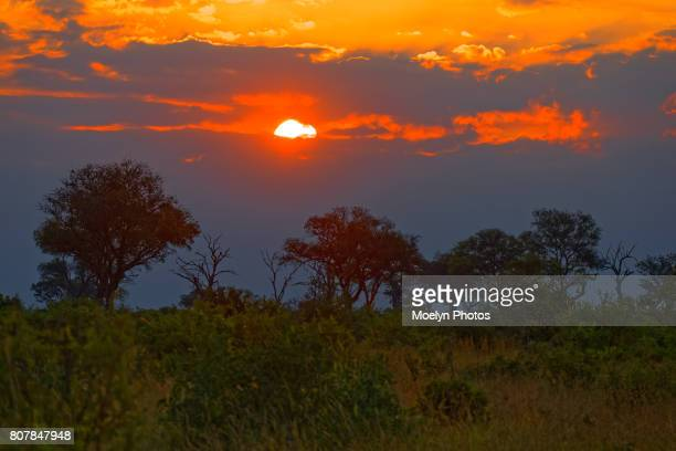 sunset in sabi sands preserve - mpumalanga province stock pictures, royalty-free photos & images