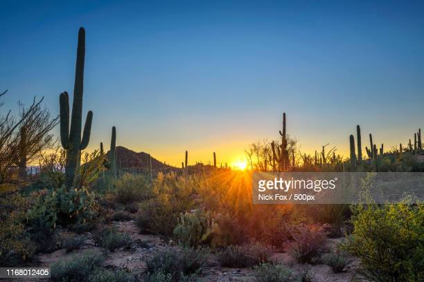 sunset in saguaro national park in arizona - sonoran desert stock pictures, royalty-free photos & images