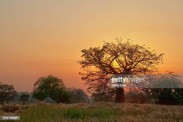 sunset in senegal - senegal fotografías e imágenes de stock