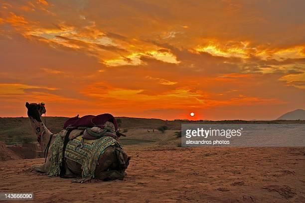 top thar desert sunset - photo #20