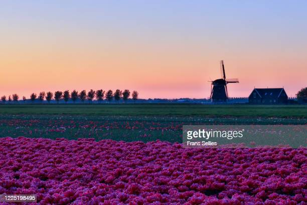 sunset in the beemster polder, unesco world heritage (the netherlands) - 干拓地 ストックフォトと画像