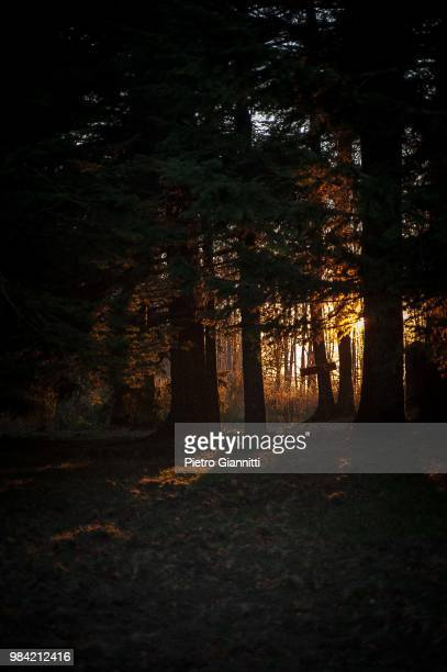 sunset in the fores - forens stock pictures, royalty-free photos & images