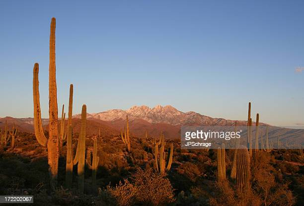 Sunset in the Four Peaks Wilderness - Arizona Desert Scene