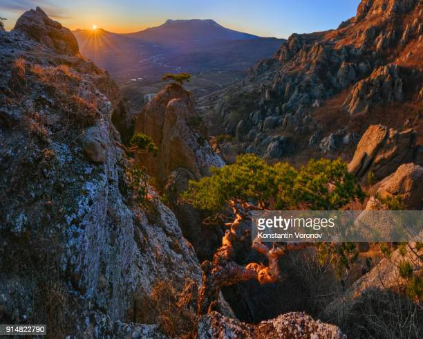 Sunset in the highlands. In the foreground is a curved old pine. Snow-covered mountain in the background. Landscape with the sun. Mount Dmemergi, Crimea