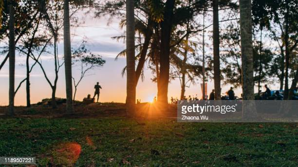 sunset in the jungle - waimea bay stock pictures, royalty-free photos & images