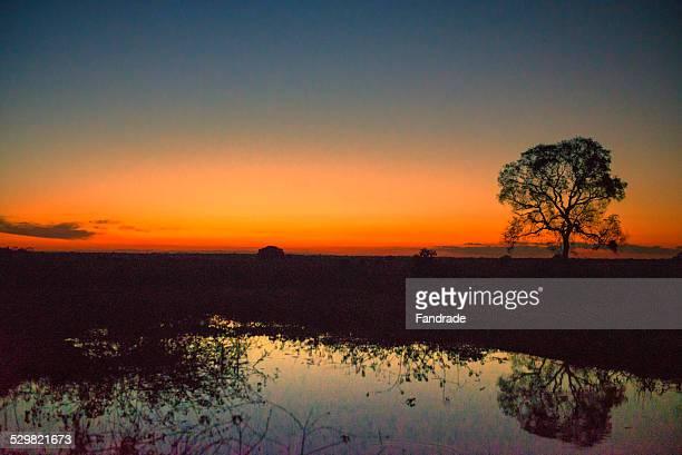 Sunset In the Pantanal Brazil