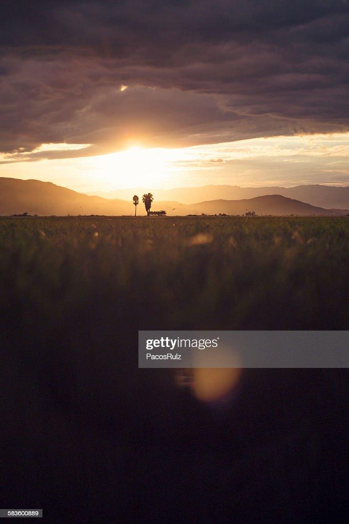 Sunset in the rice fields of Tarragona : Stock Photo