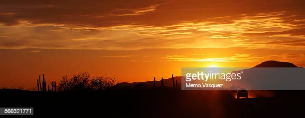 sunset in the sonoran desert - sonora mexico stock photos and pictures