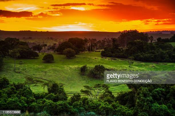 sunset in the state of parana in brazil. - londrina stock pictures, royalty-free photos & images