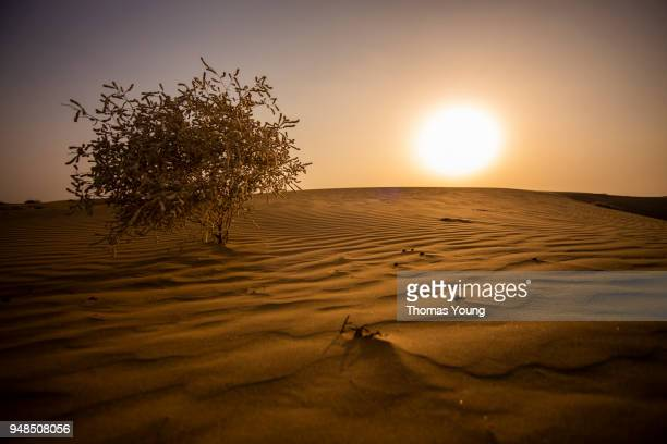 sunset in the thar desert - india summer stock-fotos und bilder