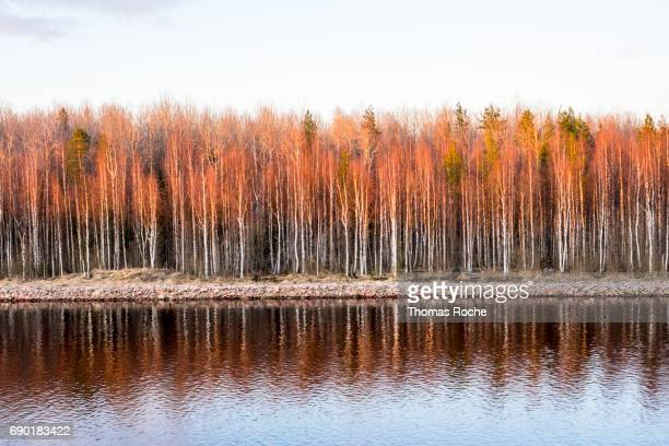 sunset in the trees - volga stock pictures, royalty-free photos & images