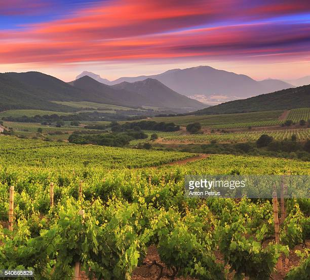 sunset in the vineyards - anton petrus stock pictures, royalty-free photos & images