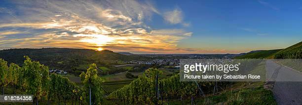 sunset in the vineyards - baden württemberg stock-fotos und bilder