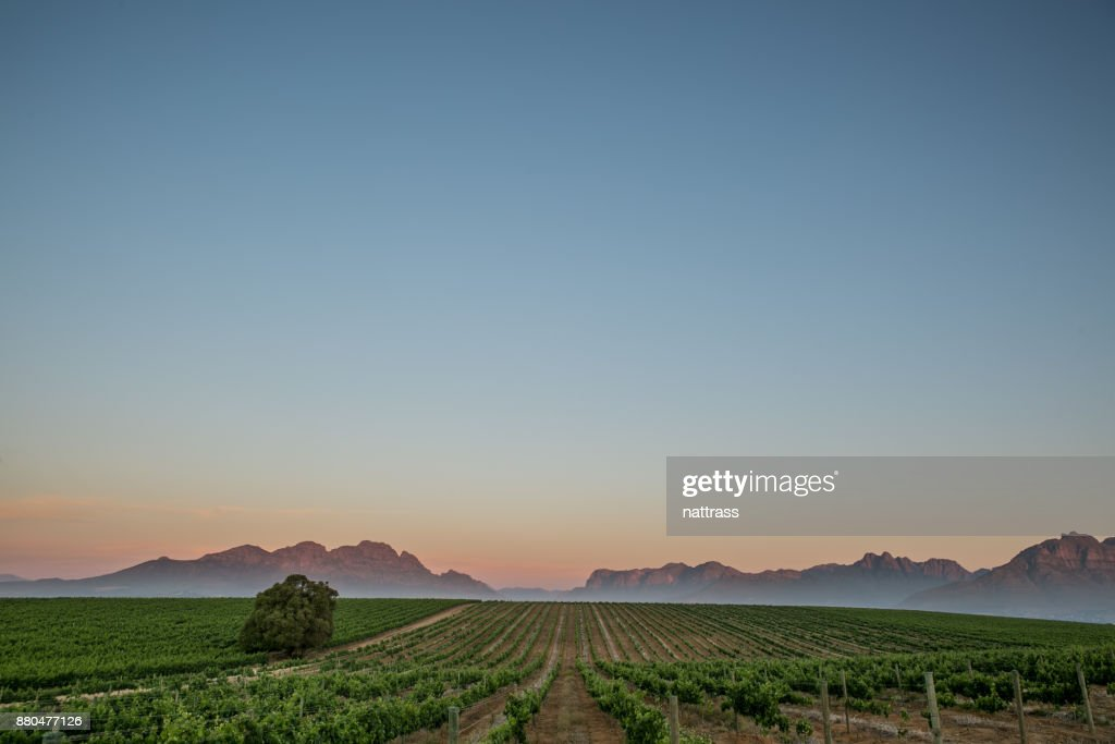 Sunset in the Winelands South Africa : Stock Photo