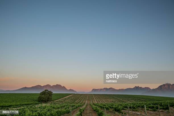 Sonnenuntergang in den Winelands Südafrika