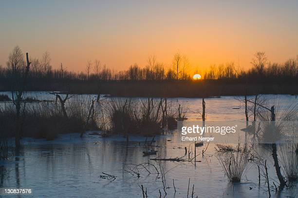 sunset in the wintery moorland, bargerveen, holland, netherlands, europe - bog stock photos and pictures