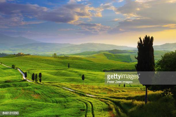 sunset in tuscany, italy - italian cypress stock photos and pictures