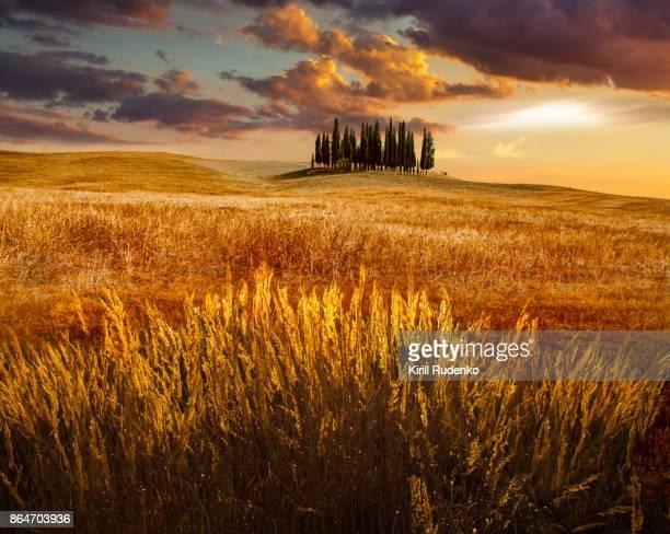 sunset in tuscany, italy - toscana foto e immagini stock