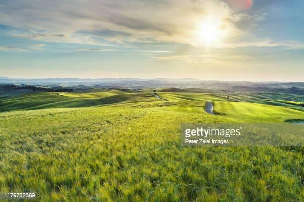 sunset in tuscany - cipresso foto e immagini stock