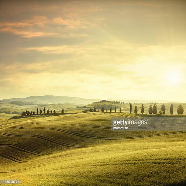 sunset in tuscany - cultivated land stock pictures, royalty-free photos & images
