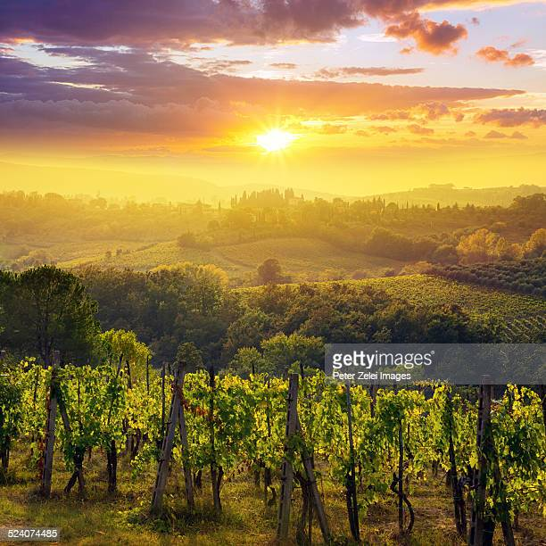 sunset in tuscany - wine vineyard stock photos and pictures