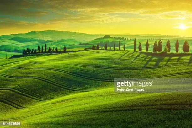 sunset in tuscany - italian cypress stock photos and pictures