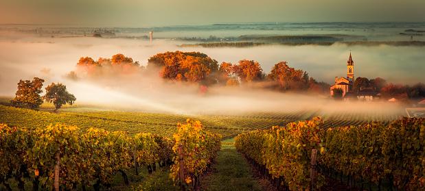 Sunset landscape bordeaux wineyard france 871931666