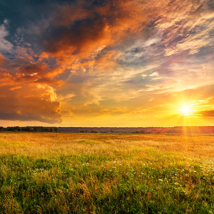 Sunset landscape with plain and forest 1130885929