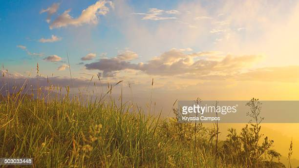 sunset light on prairie grasses - prairie stock pictures, royalty-free photos & images
