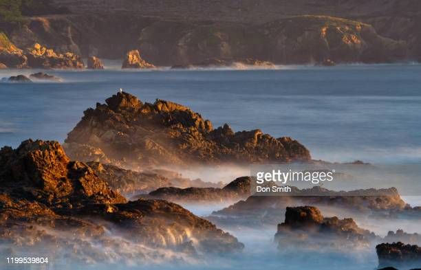 sunset light on rocks, big sur coast - don smith stock pictures, royalty-free photos & images
