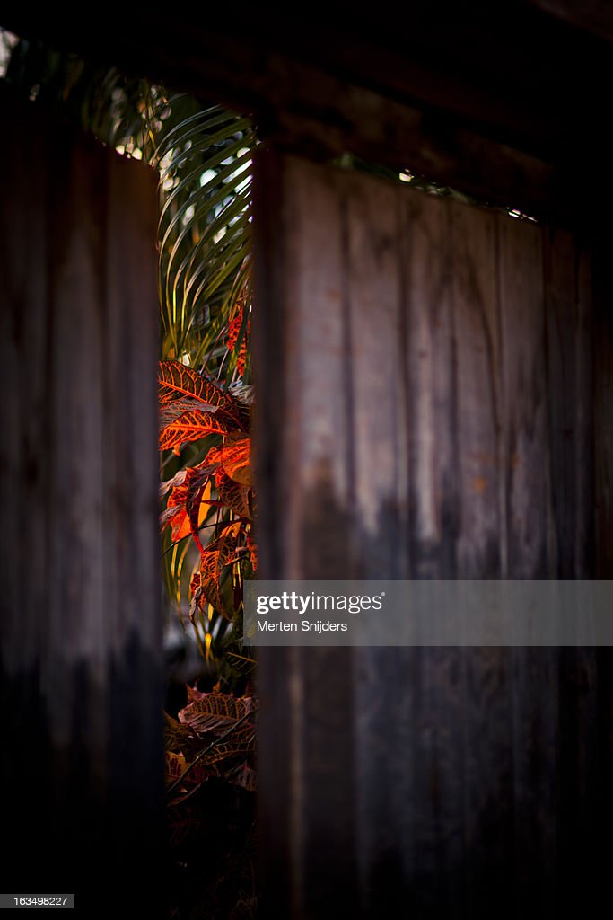 Sunset light on tree leaves behind door : Stockfoto