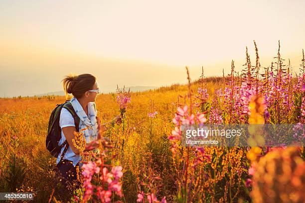 Coucher de soleil sur paysage de montagne de milieu adulte femme randonneur fleurs sauvages prairie Alpine