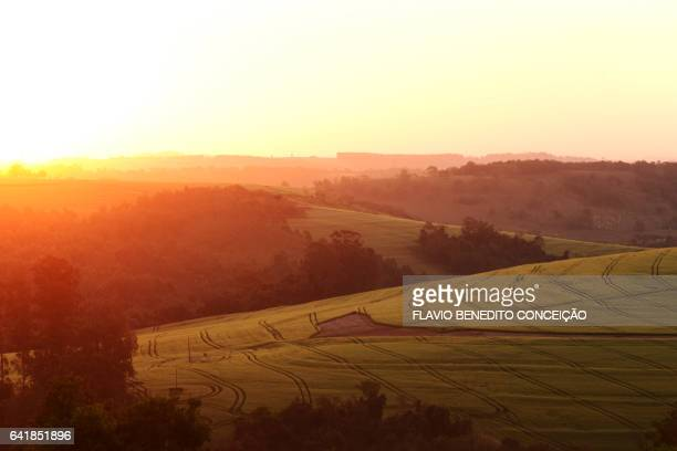 Sunset on a farm with wheat planting