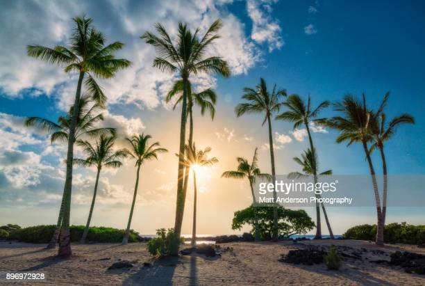 sunset on kukio beach #5 - florida beach stock pictures, royalty-free photos & images