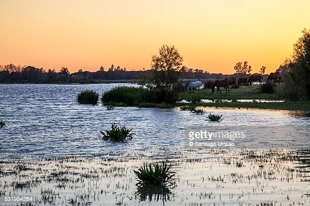 sunset on lagoon on edge of el rocio - donana national park stock photos and pictures