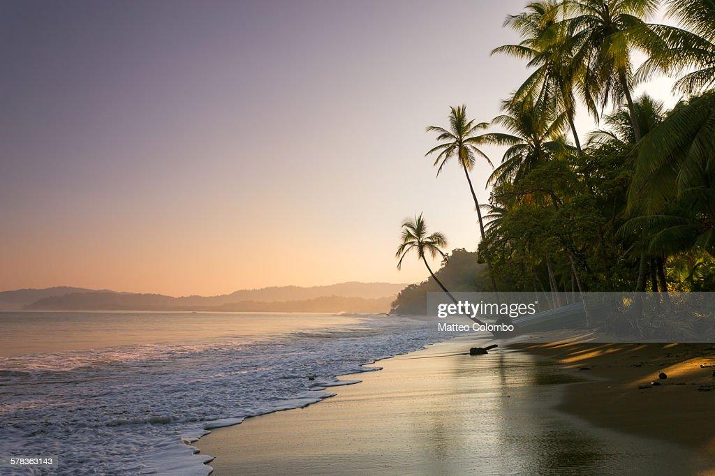 Sunset on palm fringed beach, Costa Rica : Stock Photo