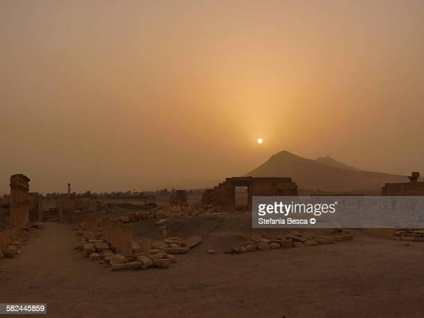 sunset on palmyra - cité de l'architecture et du patrimoine photos et images de collection